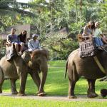 02-bali-elephant-ride-tour
