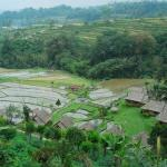 02-bali-bedugul-tour-pacung-rice-field-view