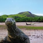 05-komodo-dragon-komodo-island-tour-package