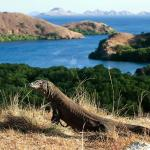 10-komodo-dragon-komodo-island-tour-package