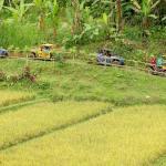 04-bali-buggy-utv-pass-ricefield