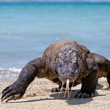 Komodo Packages